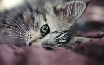 Animal - Cat Wallpapers and Backgrounds ID : 217627