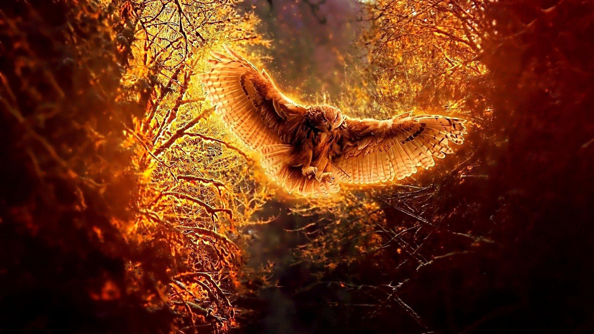 Animal - Owl  Fall Wallpaper