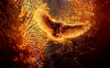 Animal - Owl Wallpapers and Backgrounds ID : 218825