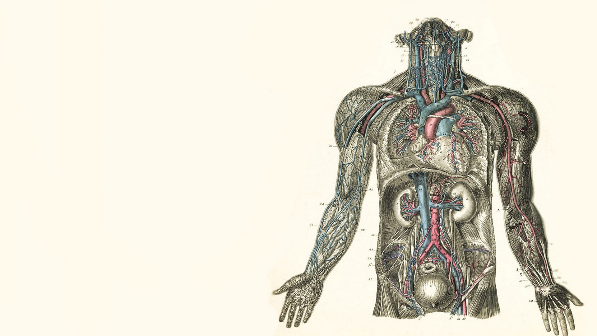 anatomy wallpaper background - photo #3