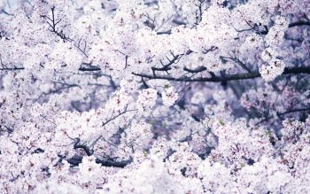 Earth - Blossom Wallpapers and Backgrounds ID : 219305
