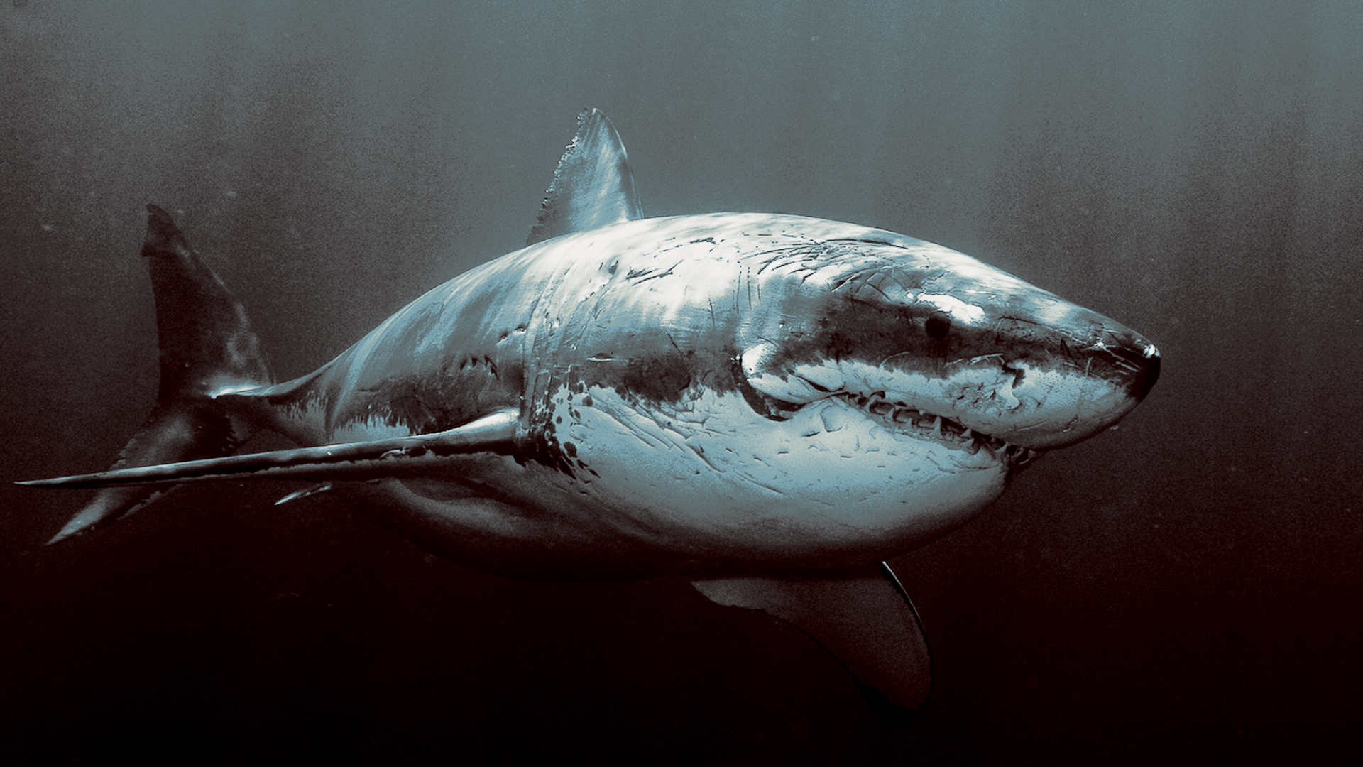193 shark hd wallpapers background images wallpaper abyss page 4 voltagebd Images