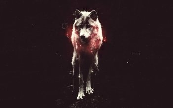 Tier - Wolf Wallpapers and Backgrounds ID : 221029