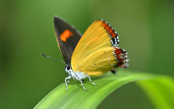 Animal - Butterfly Wallpapers and Backgrounds ID : 221929
