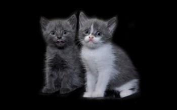 Animal - Cat Wallpapers and Backgrounds ID : 224105