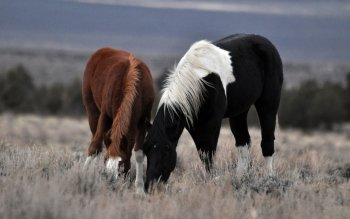 Animal - Horse Wallpapers and Backgrounds ID : 224425