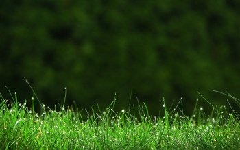 Earth - Grass Wallpapers and Backgrounds ID : 225355