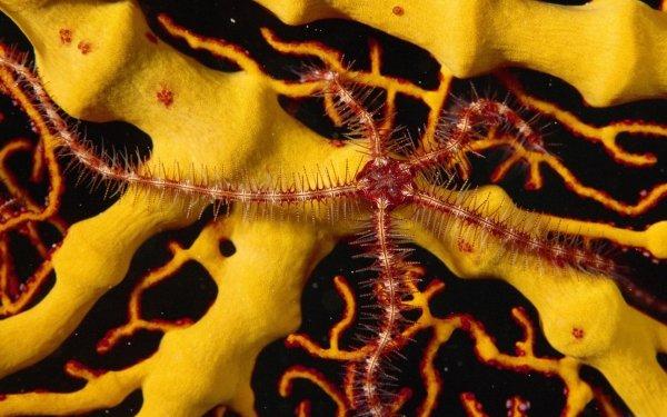 Animal Starfish Ocean Reef HD Wallpaper   Background Image