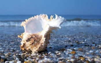 Earth - Shell Wallpapers and Backgrounds ID : 233585