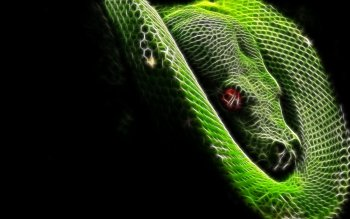 Animal - Snake Wallpapers and Backgrounds ID : 233659