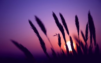 Earth - Sunset Wallpapers and Backgrounds ID : 234909