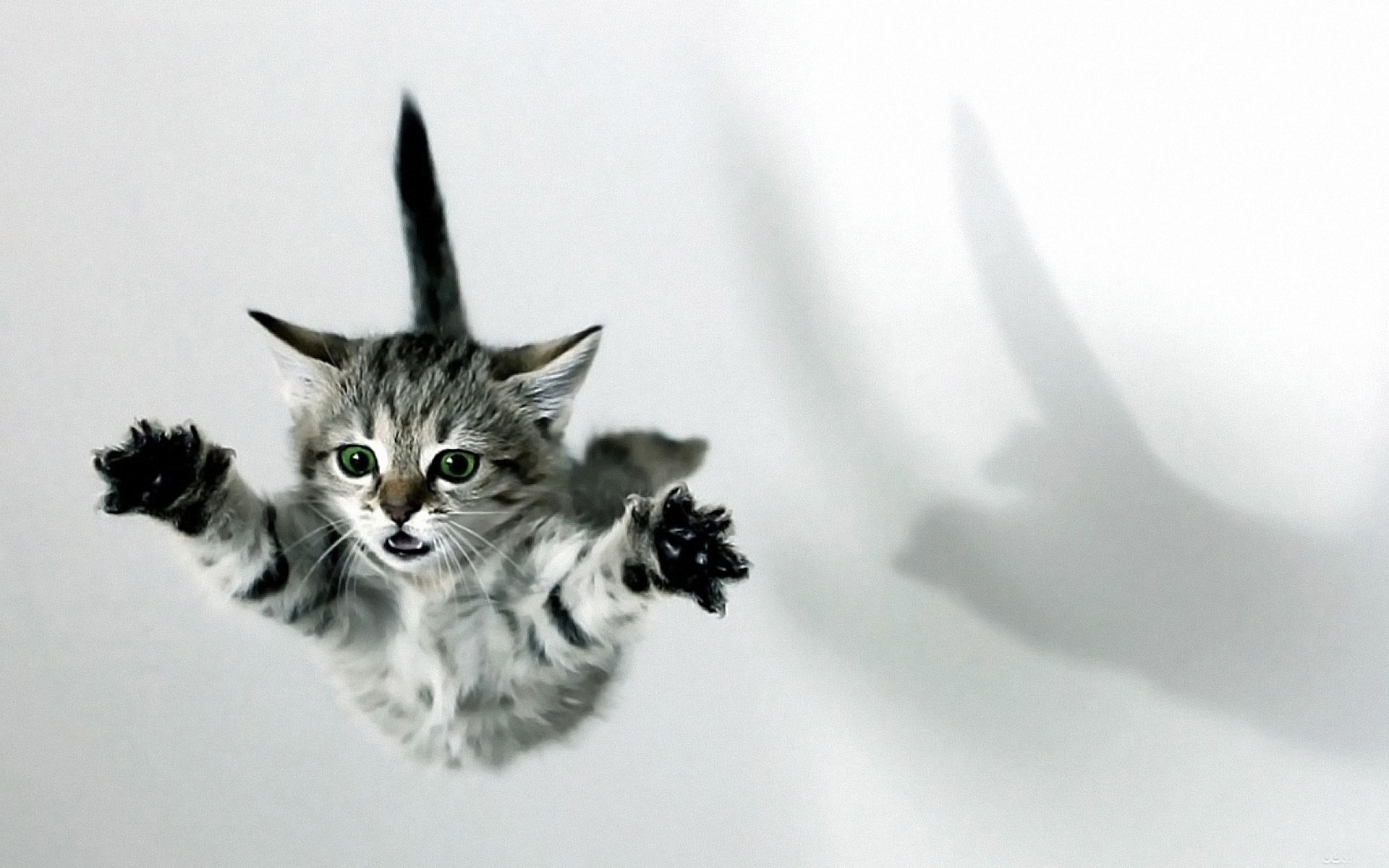Animal - Cat  Kitten Animal Falling Wallpaper