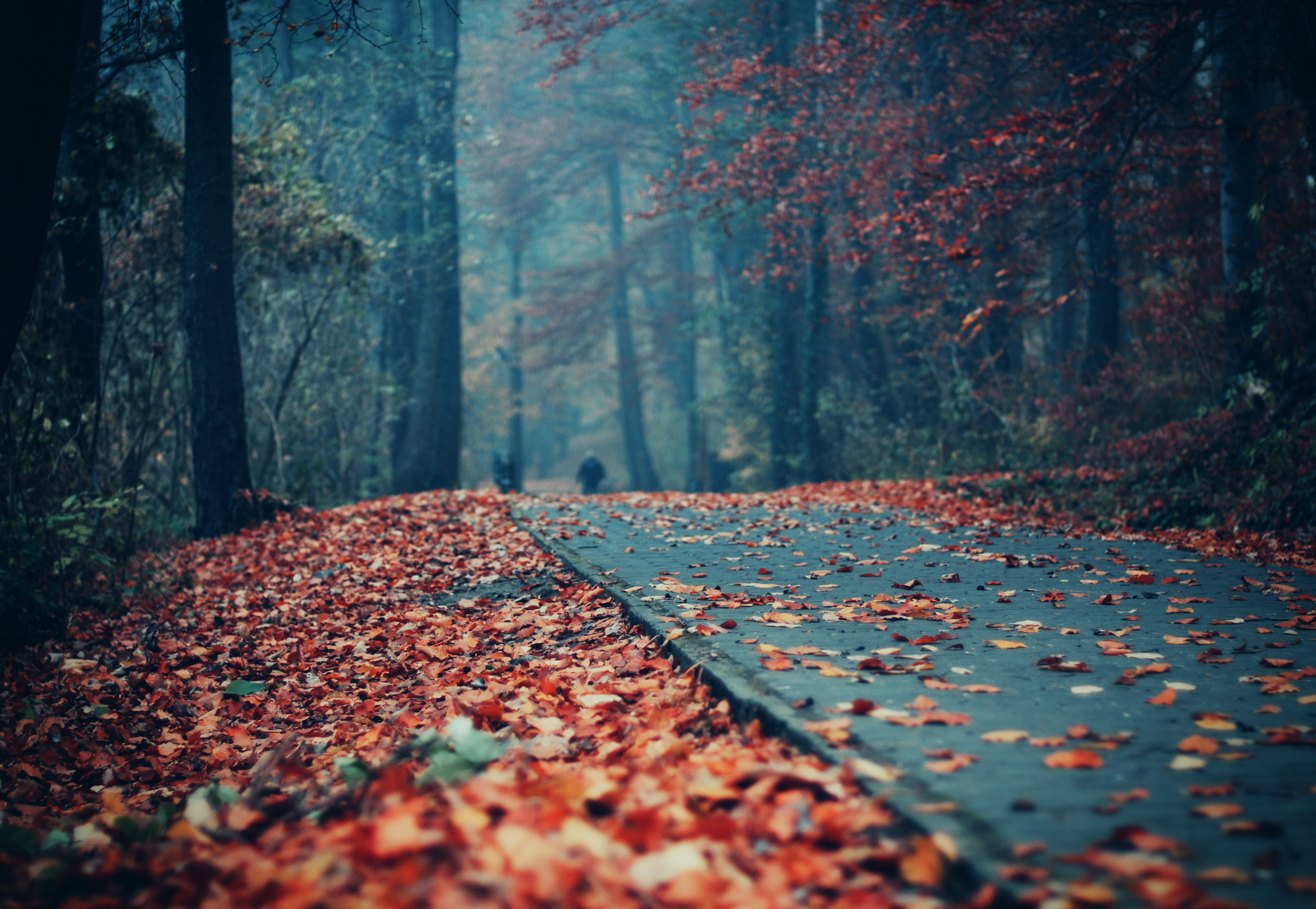 Fall Full Hd Wallpaper And Background 3753x2592 Id 236657