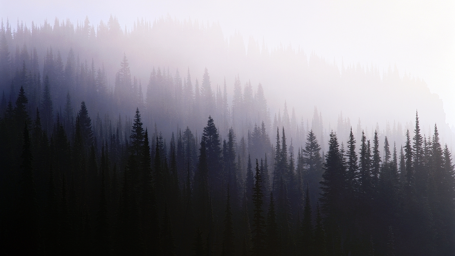 496 Fog Hd Wallpapers Backgrounds Wallpaper Abyss Page 9
