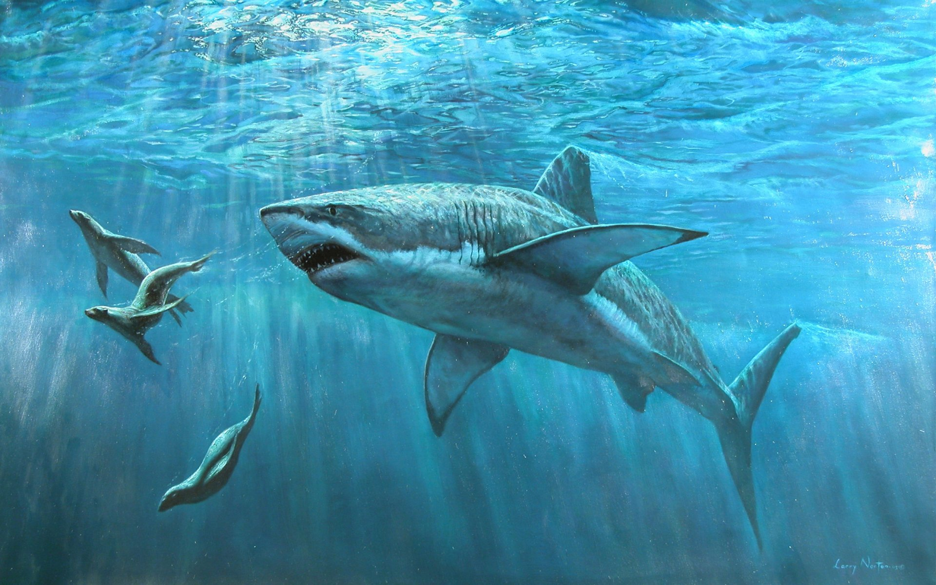 Animal - Shark  Animal Water Sea Ocean Wallpaper
