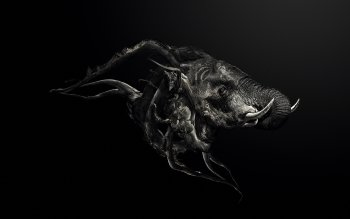 Dark - Animal Wallpapers and Backgrounds ID : 236415