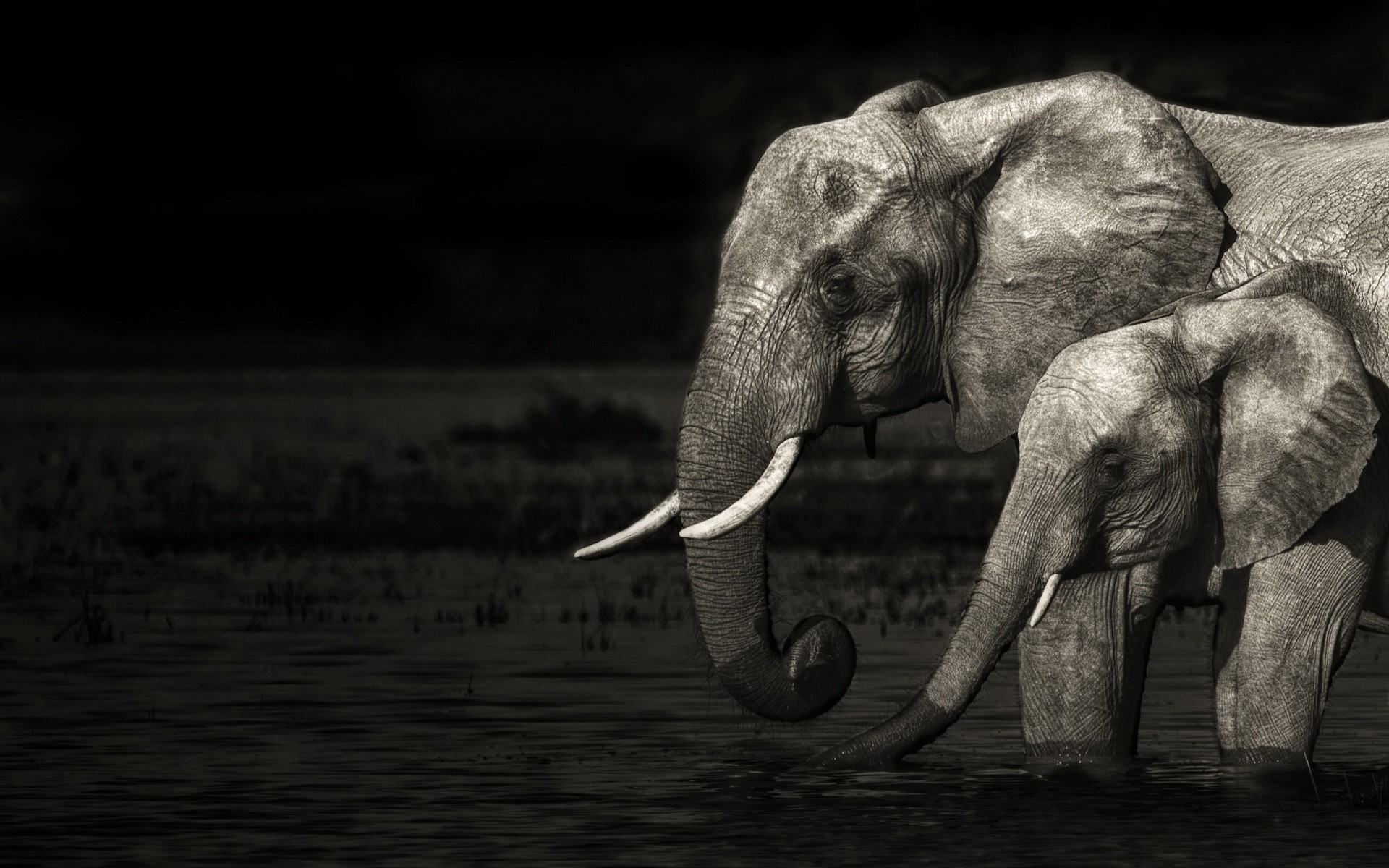 elephant computer wallpapers desktop backgrounds
