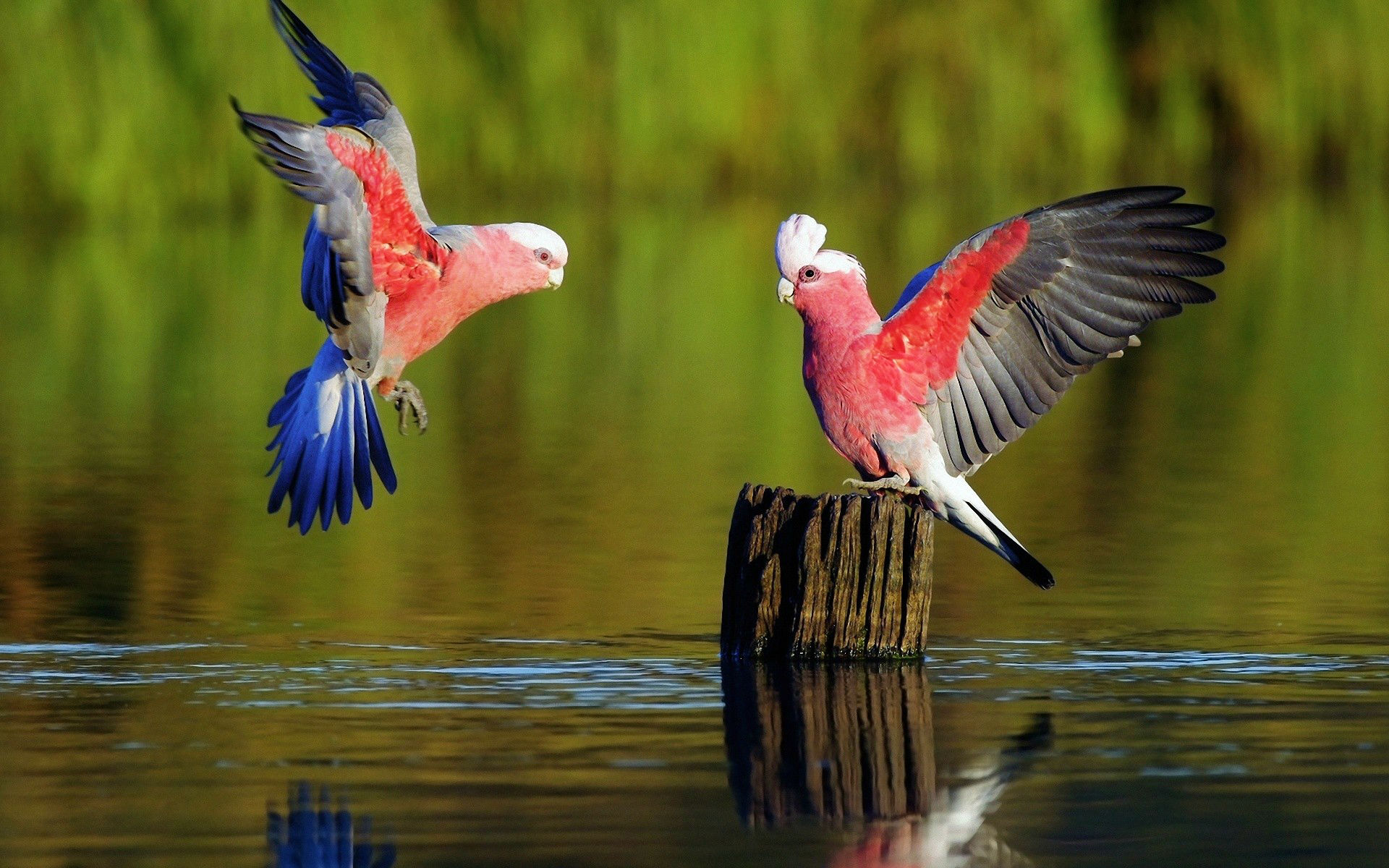 137 parrot hd wallpapers | background images - wallpaper abyss