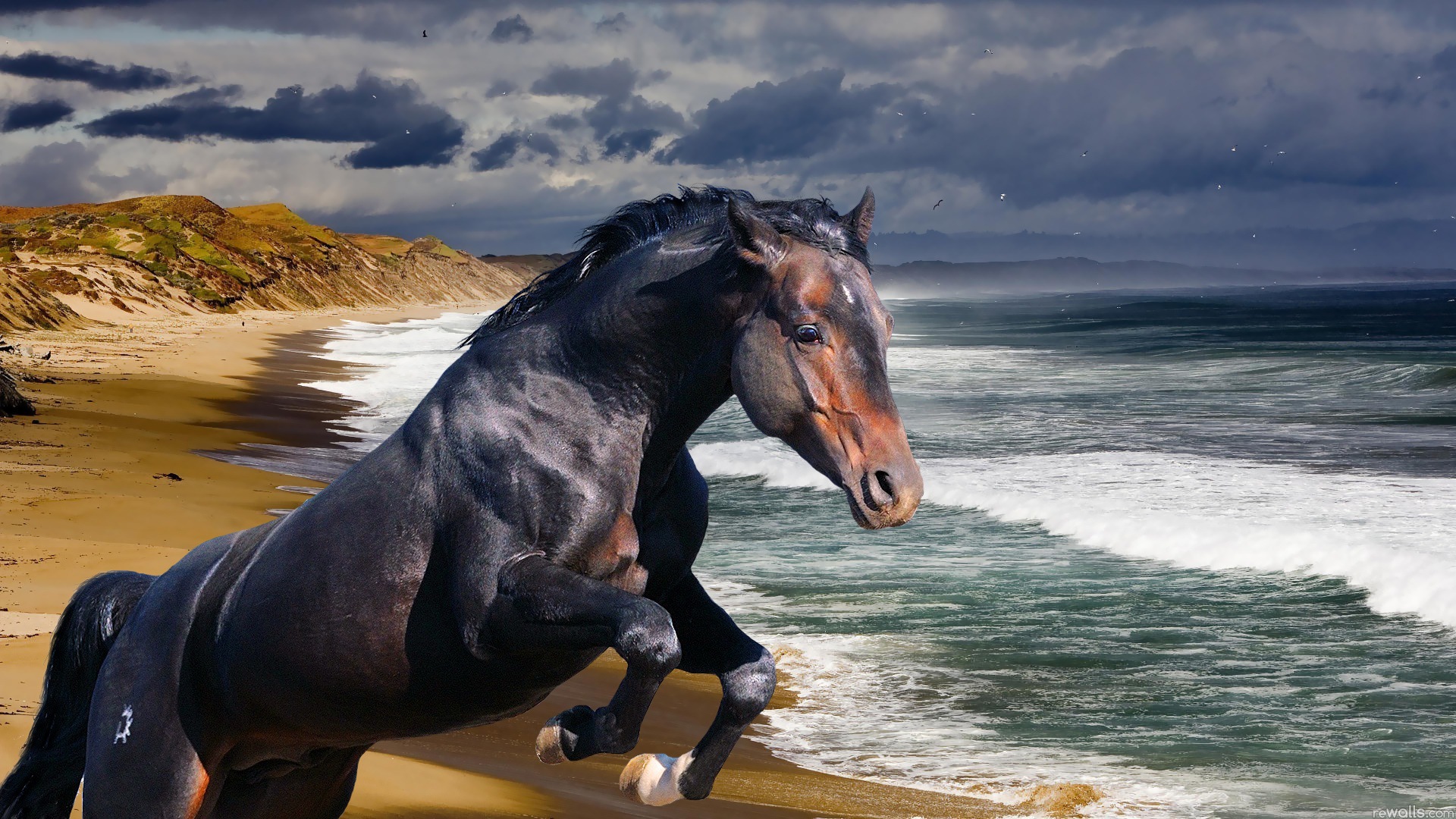 Animal - Horse  Ocean Beach Sea Wave Wallpaper