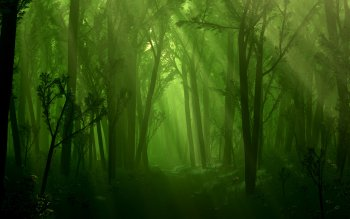 Fantasy - Forest Wallpapers and Backgrounds ID : 242527