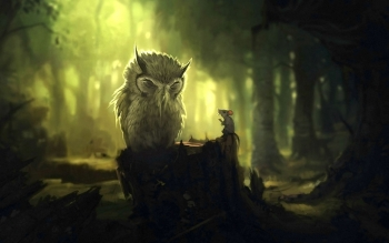 Animal - Owl Wallpapers and Backgrounds ID : 243089