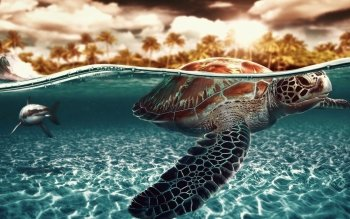 Djur - Turtle Wallpapers and Backgrounds ID : 243357