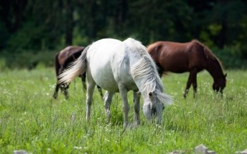 Animal - Horse Wallpapers and Backgrounds ID : 244077