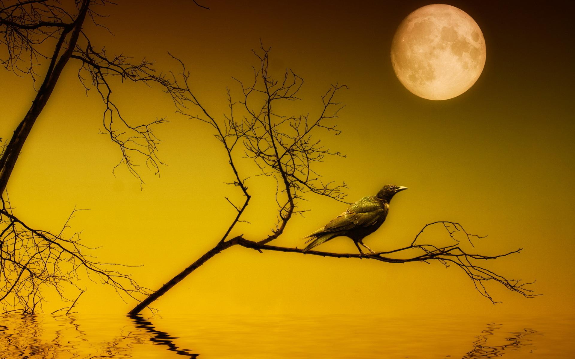 Wallpaper download jat - Movie The Crow Bird Gothic Dark Occult Wallpaper Download