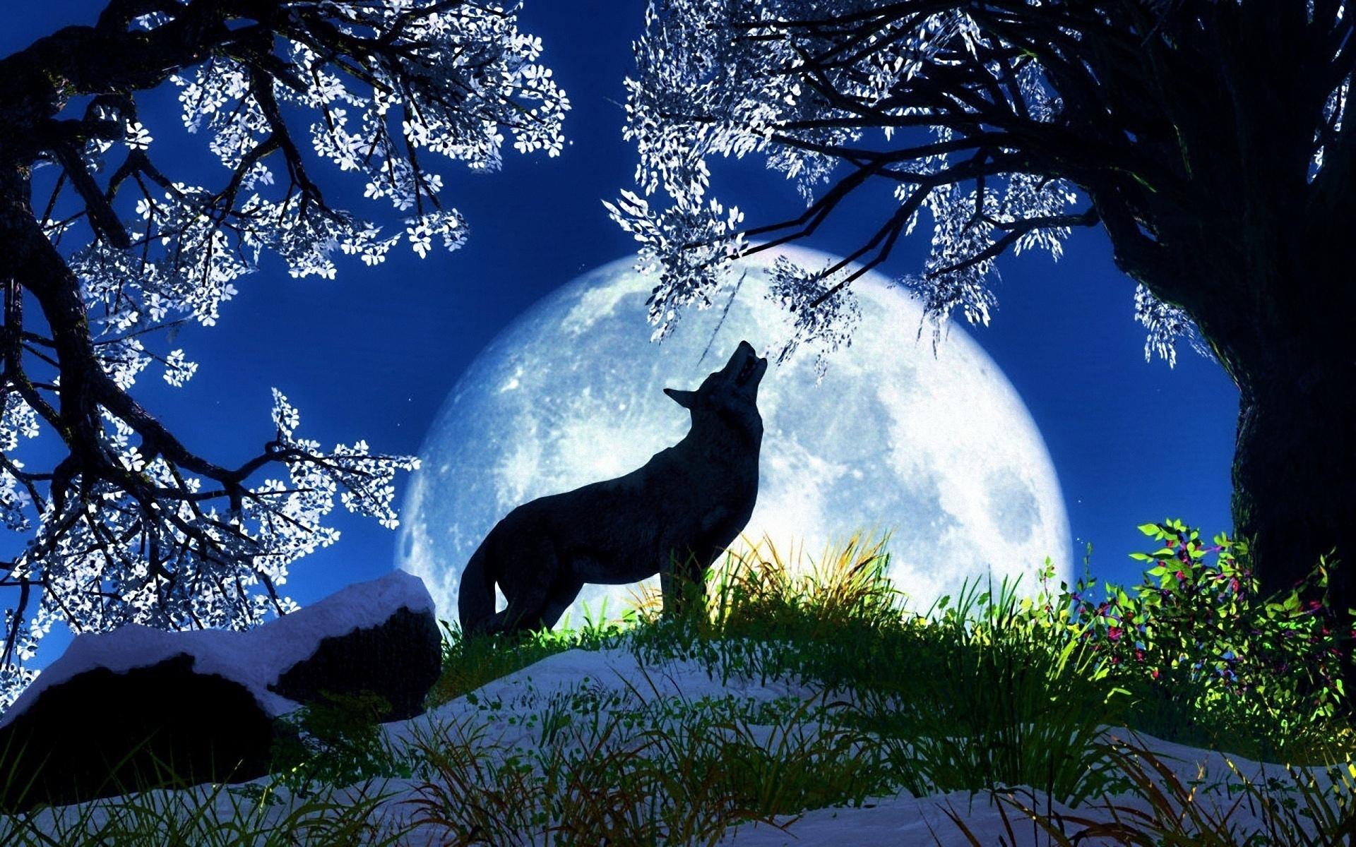 Wolf Desktop Backgrounds Wallpaper