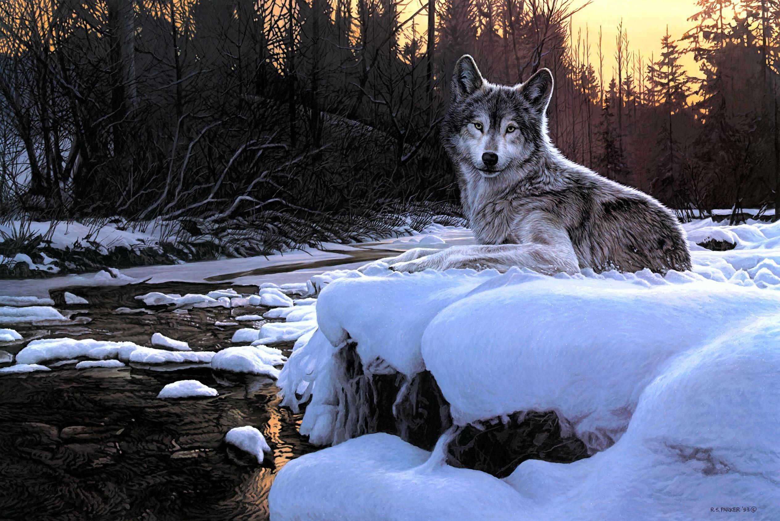 Gray Wolf Computer Wallpapers Desktop Backgrounds x