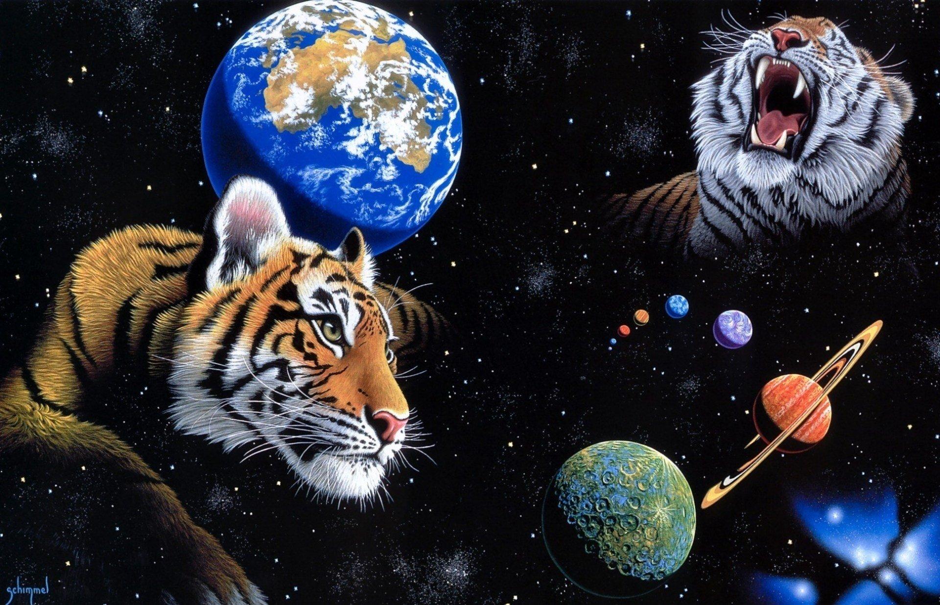 Tiger HD Wallpaper | Background Image | 1920x1236 | ID ...