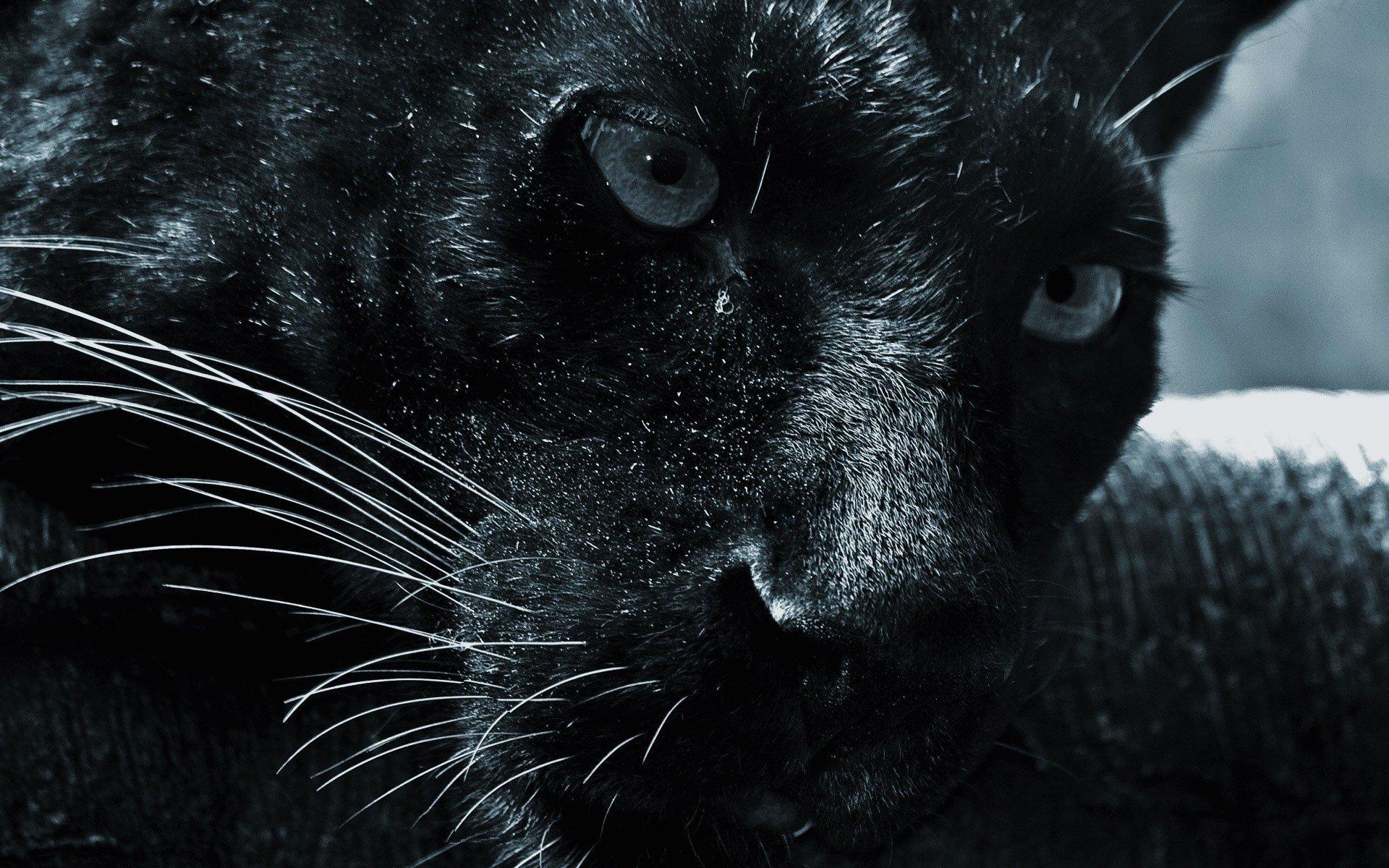 HD Wallpaper | Background Image ID:248697. 1920x1200 Animal Jaguar