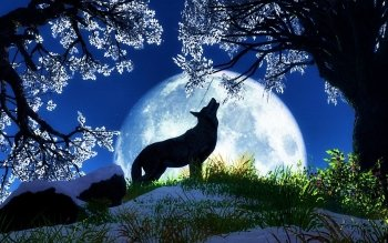 Animal - Wolf Wallpapers and Backgrounds ID : 248699