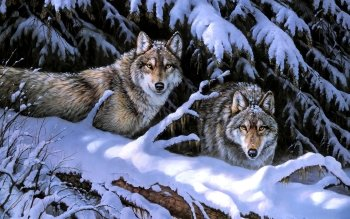 Dierenrijk - Wolf Wallpapers and Backgrounds ID : 248999