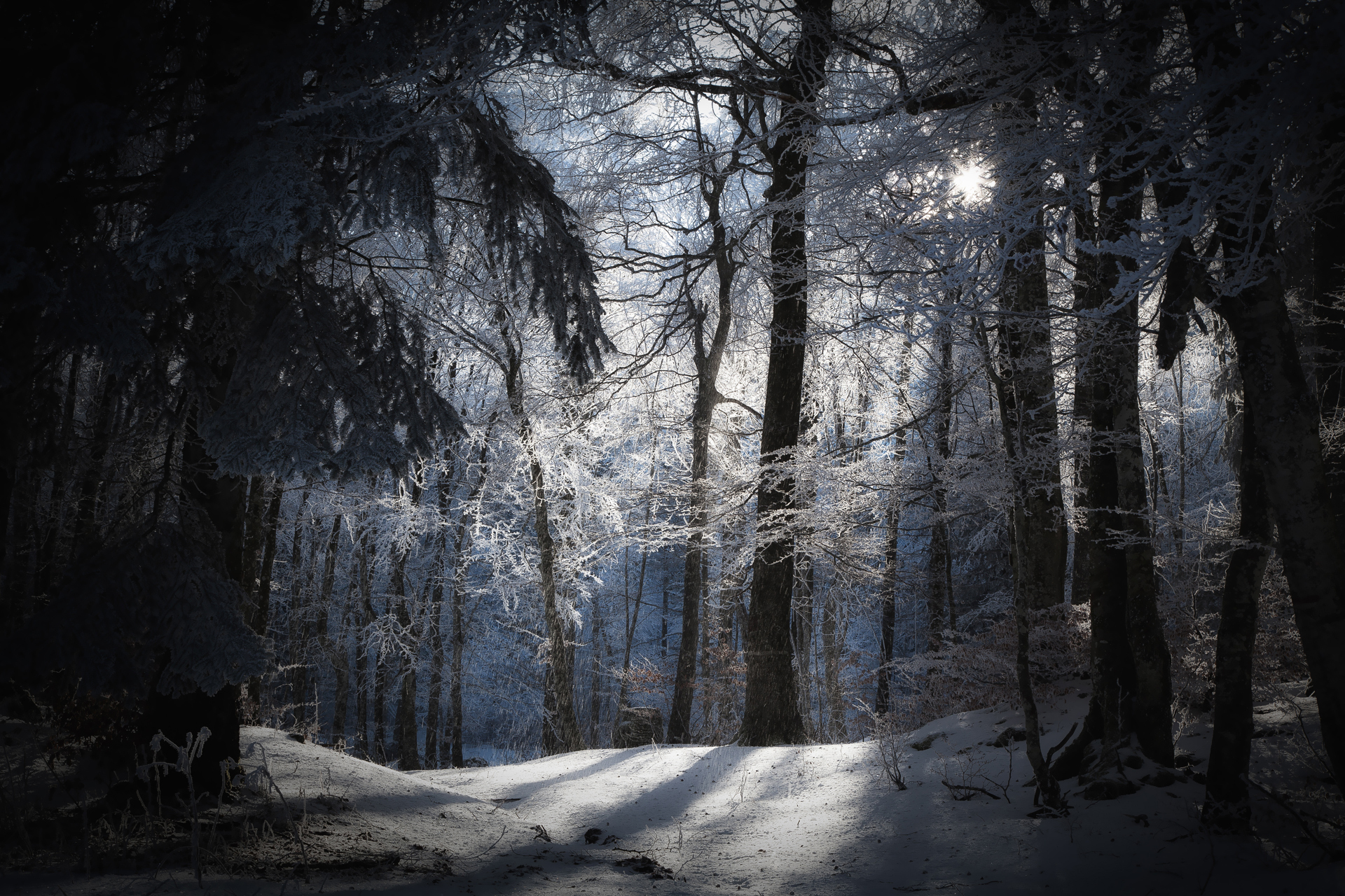 Winter Full HD Wallpaper And Background Image
