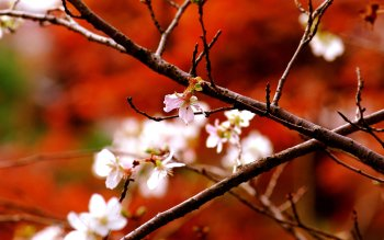 Earth - Blossom Wallpapers and Backgrounds ID : 250277