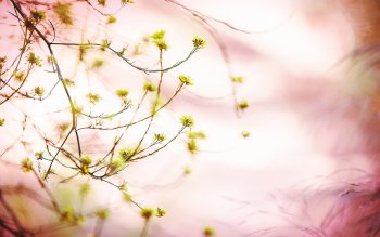 Earth - Blossom Wallpapers and Backgrounds ID : 252755