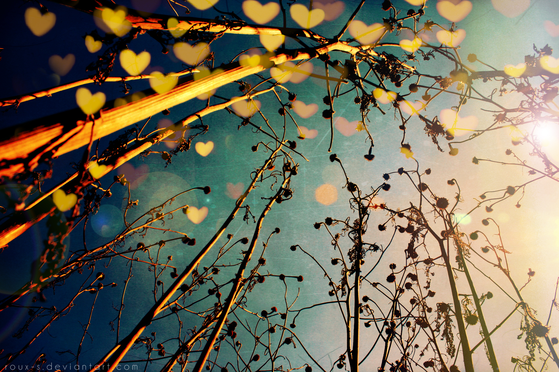 Popular Wallpaper Love Photography - 258379  2018_2643.jpg