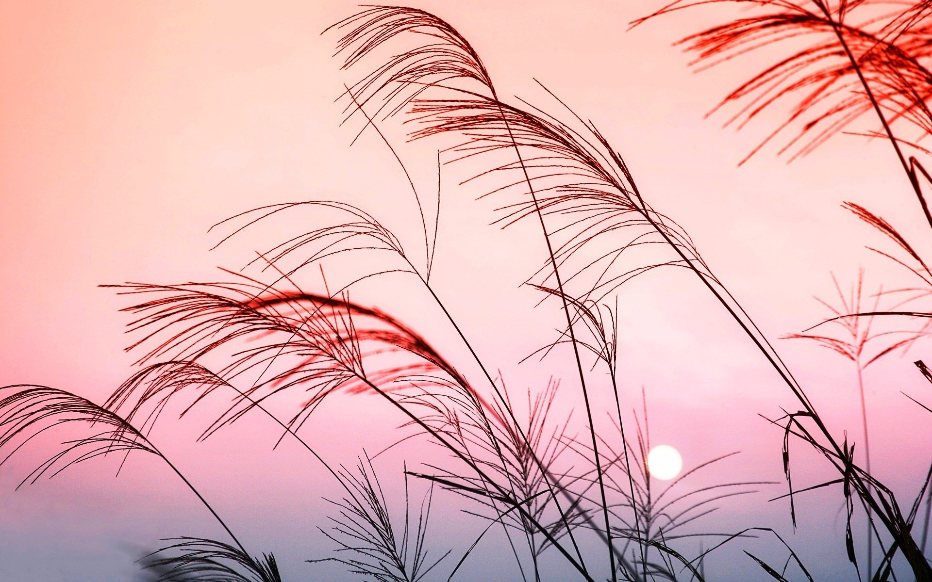 Earth - Grass  Pastel Wallpaper