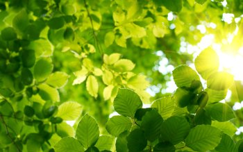 Earth - Leaf Wallpapers and Backgrounds ID : 263007