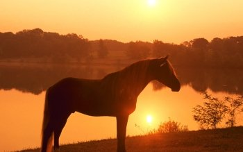 Animal - Horse Wallpapers and Backgrounds ID : 263955