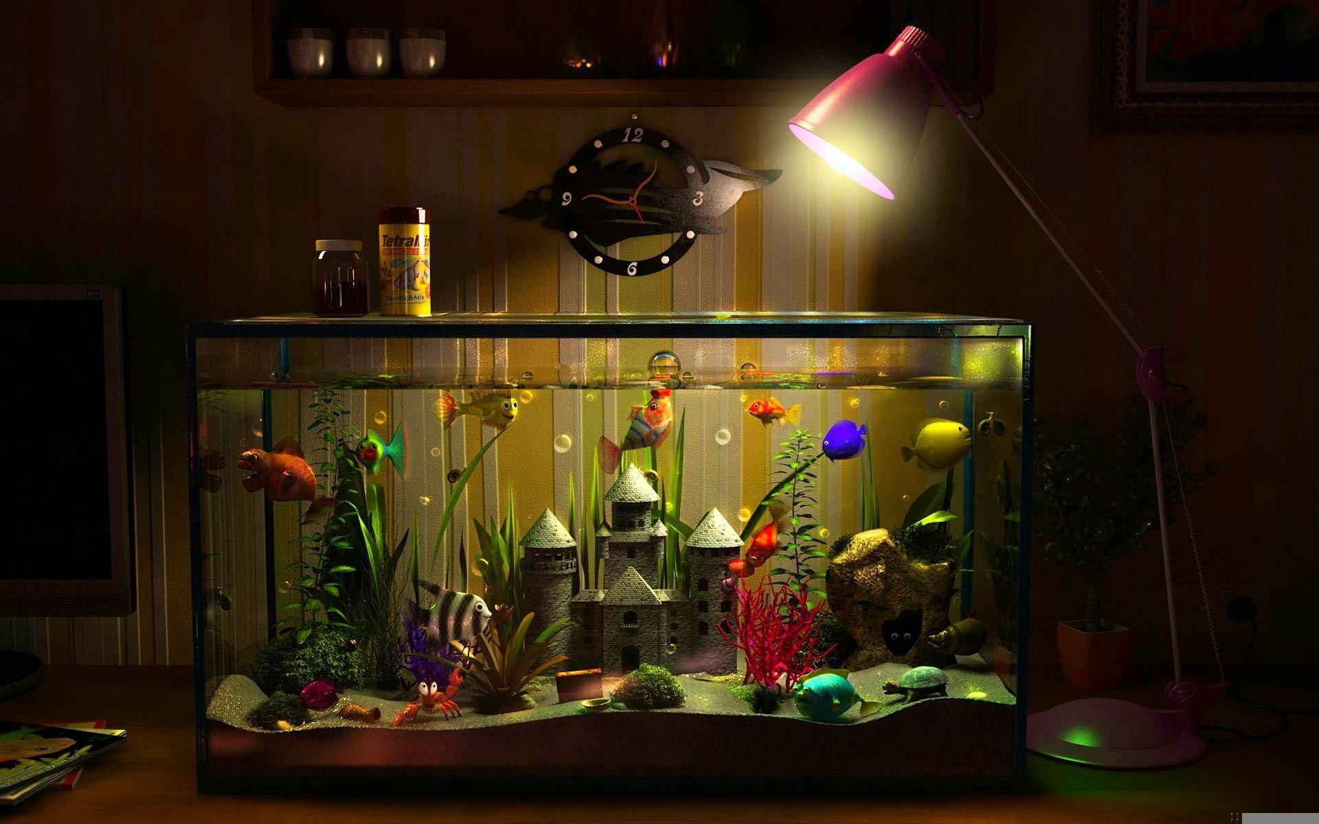 Fish Tank Hd Wallpaper Background Image 1920x1200