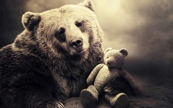 Animal - Bear Wallpapers and Backgrounds ID : 265917
