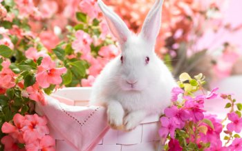 Animal - Cute Wallpapers and Backgrounds ID : 274727