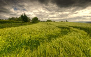 Earth - Wheat Wallpapers and Backgrounds ID : 274915