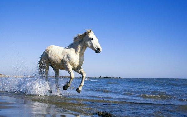 Animal Horse Ocean Water Beach HD Wallpaper | Background Image
