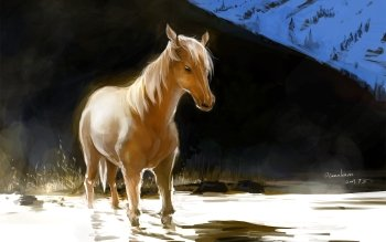 Animal - Horse Wallpapers and Backgrounds ID : 275485