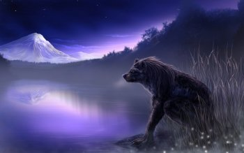 Donker - Werewolf Wallpapers and Backgrounds ID : 276299