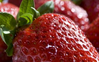 Food - Strawberry Wallpapers and Backgrounds ID : 276875