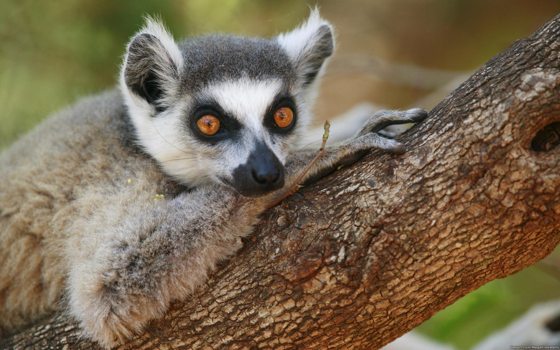 download wallpaper 3840x2160 lemur-#6